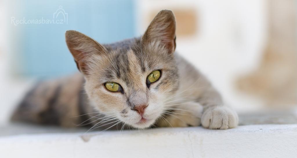 bez koček to v Řecku nejde ;)
