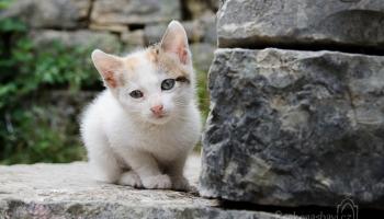 koťátka byla naše hlavní atrakce :) tohle bylo krásně zdravé...