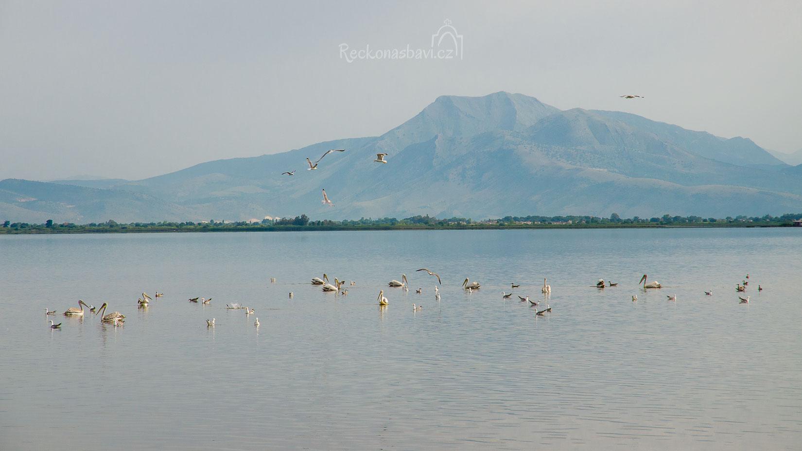 brzy ráno jetě není vedro a tak máme konečně štěstí na skupinku krásných pelikánů!
