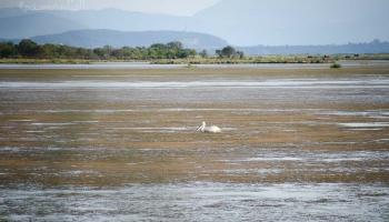 odpoledne moc štěstí na pelikány nemáme, je horko. Až k večeru se poštěstí u kostelíka Παναγιά της Ροδιάς