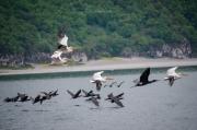 Prespanská jezera nabízí největší kolonie dalmatských pelikánů na světě