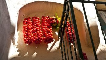 Kde je možné přivázat šňůrku, tam se pohupují v horkém větříku rajčátka jako korálky