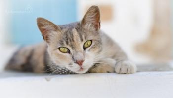 siesta patří kočkám, my to tu musíme celé prošmejdit :)