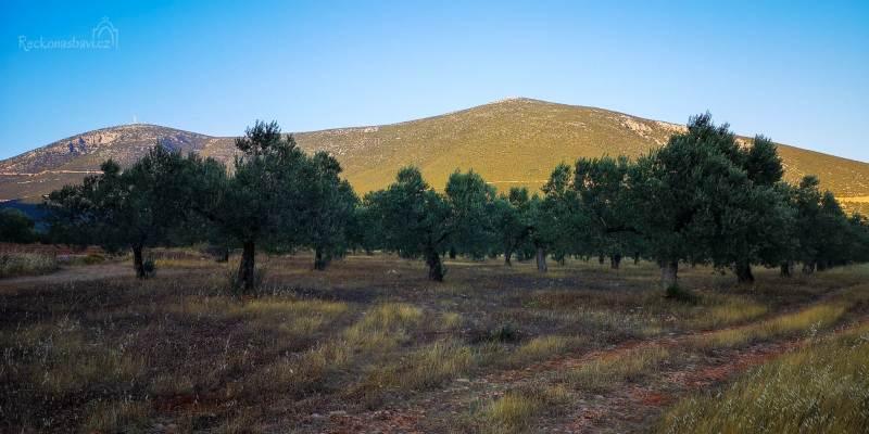 všude samý olivovník
