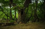 Les je pro mnohé z nás vytouženým místem odpočinku. Je synonymem ticha a nedotčené přírody.