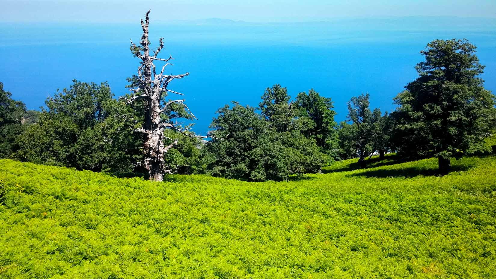 Na Samothraki hrdé stromy umírají ve stoje...