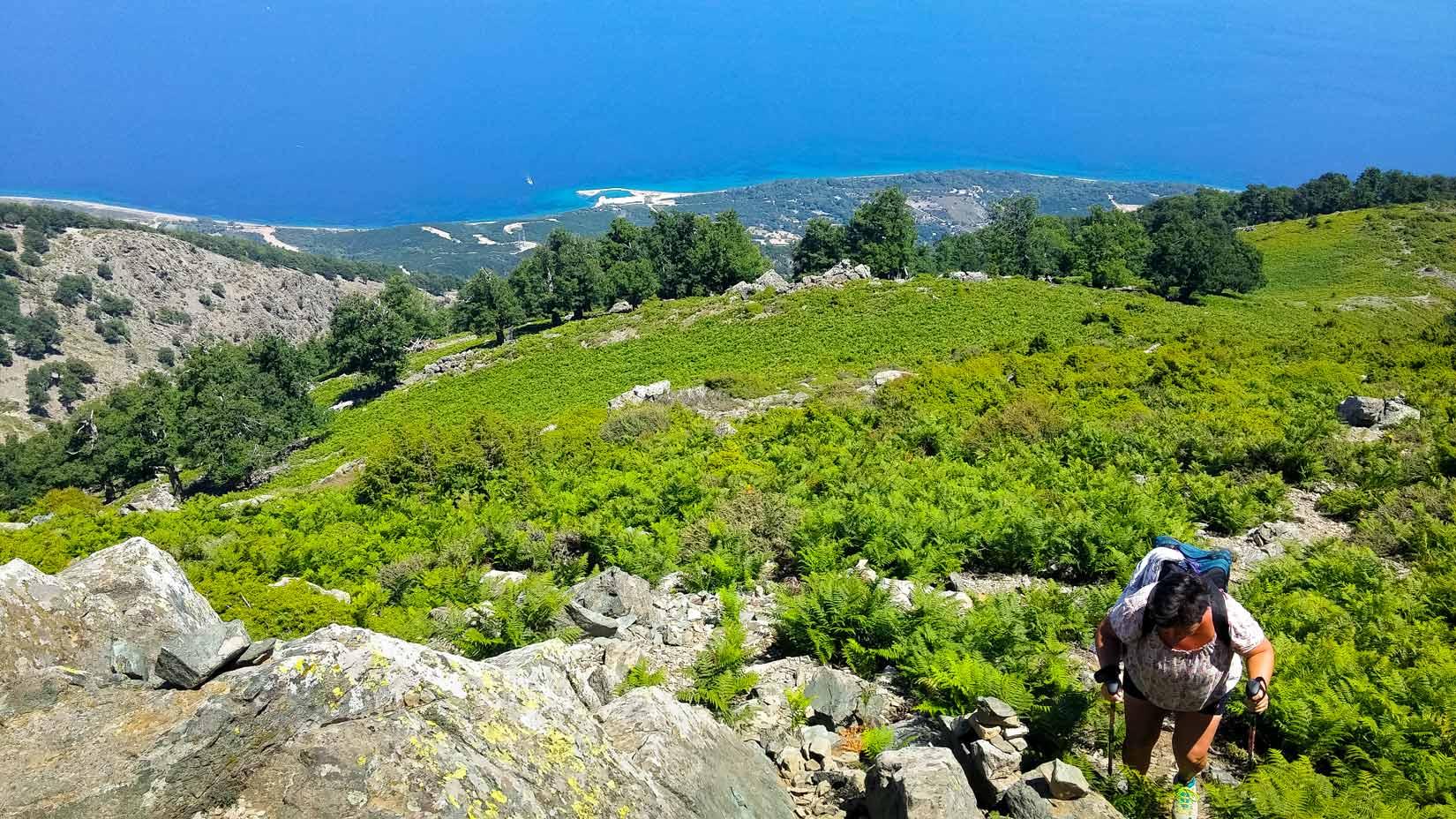 Hranice mezi kapradím a holými skalisky