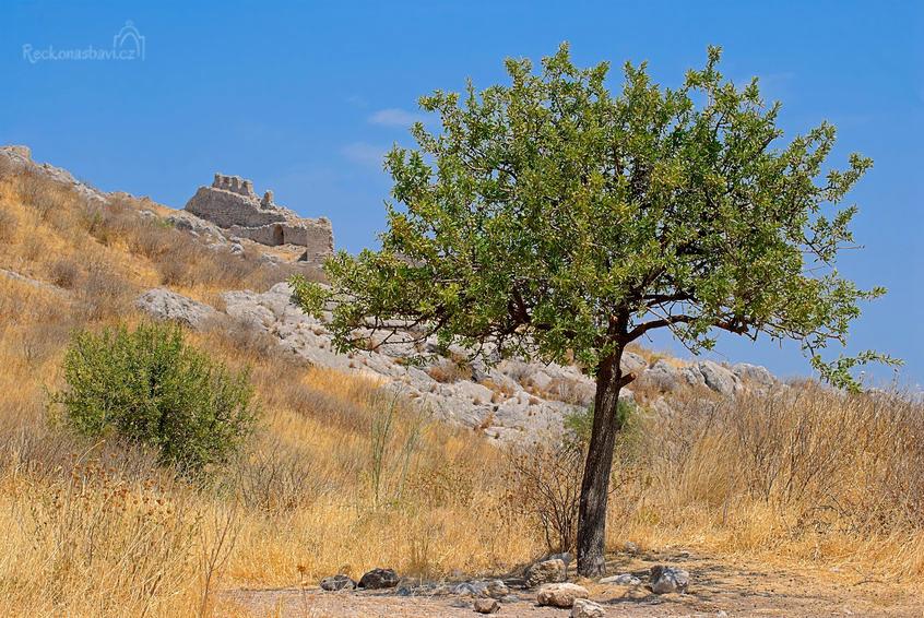 Strom s granátovými jablky v antickém městě Corinth (Ancient Corinth)
