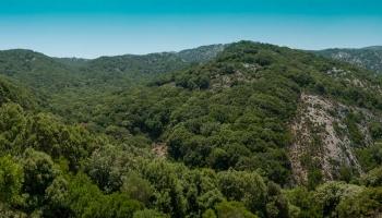 Les Rándi dělá čest svému označení, není to žádný hájíček s pár keříky zeleně, v hlubokém lese rostou vzrostlé staleté duby.