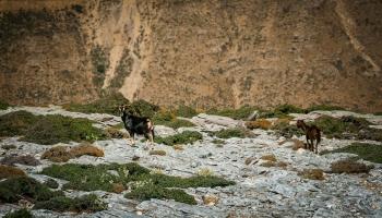 Zde, v průsmyku mezi pohořími Atheras a Melissa, je pomyslná křižovatka několika poznávacích stezek ostrova Ikaria. Některé z nich jsme měli tu čest jako první Moravané prošlápnout, ale o tom až příště...