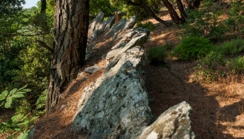 Tohle zřejmě nebudou zábrany proti kozám, spíše hraniční kameny, Ale kdo ví, třeba tu před staletími byl olivovníkový háj a terasy.