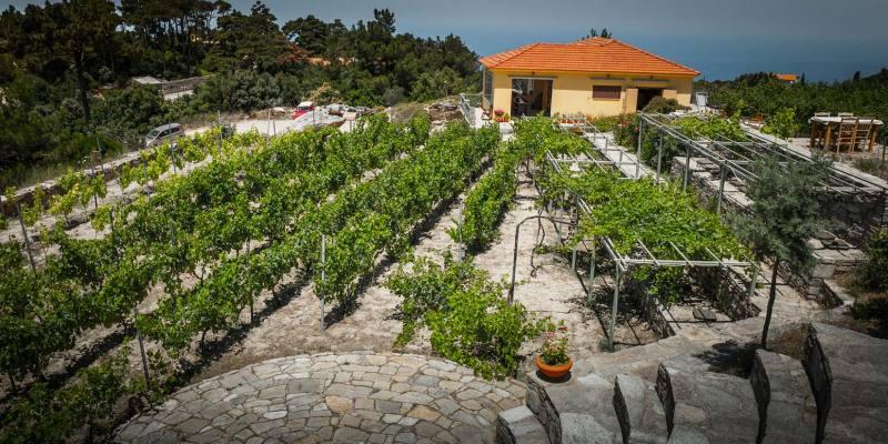 Vinařství Afianes wines