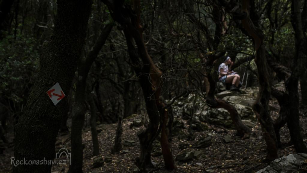 Radi forest - nejstarší les v Egejské moři se staletými duby