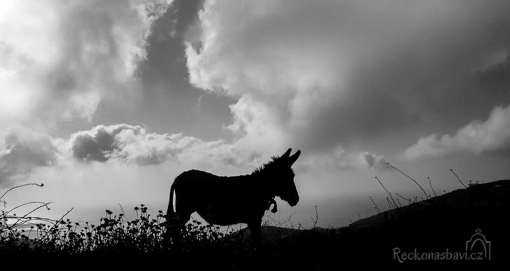 oslík na okraji horské vesničky Spoa