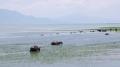 místní kolorit dotváří stáda vodních buvolů, kteří jsou zde chováni na maso a mléko.
