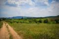 Cestou od hraničního přechodu Evzoni projedete vesničkami Plagia a Fanos, kde se pěstuje nejlepší červené víno v řecké Makedonii!
