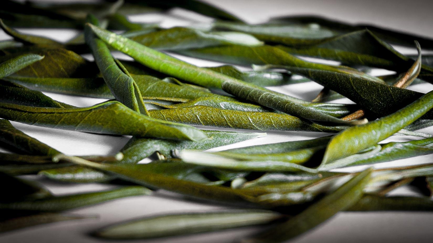 Usušený olivový list uchovávejte v temnu a suchu
