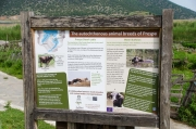 Na ostrůvku žijí miniaturní krávy a vodní buvoli