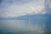 výhodu mají Ti, kteří si přivstanou, protože každý lodní výlet ptáky vyruší a ti okamžitě odletí klidně do Albánie nebo F.Y.R.O.M. :))