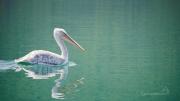 a pozor! Krásný pelikán na pravoboku :)
