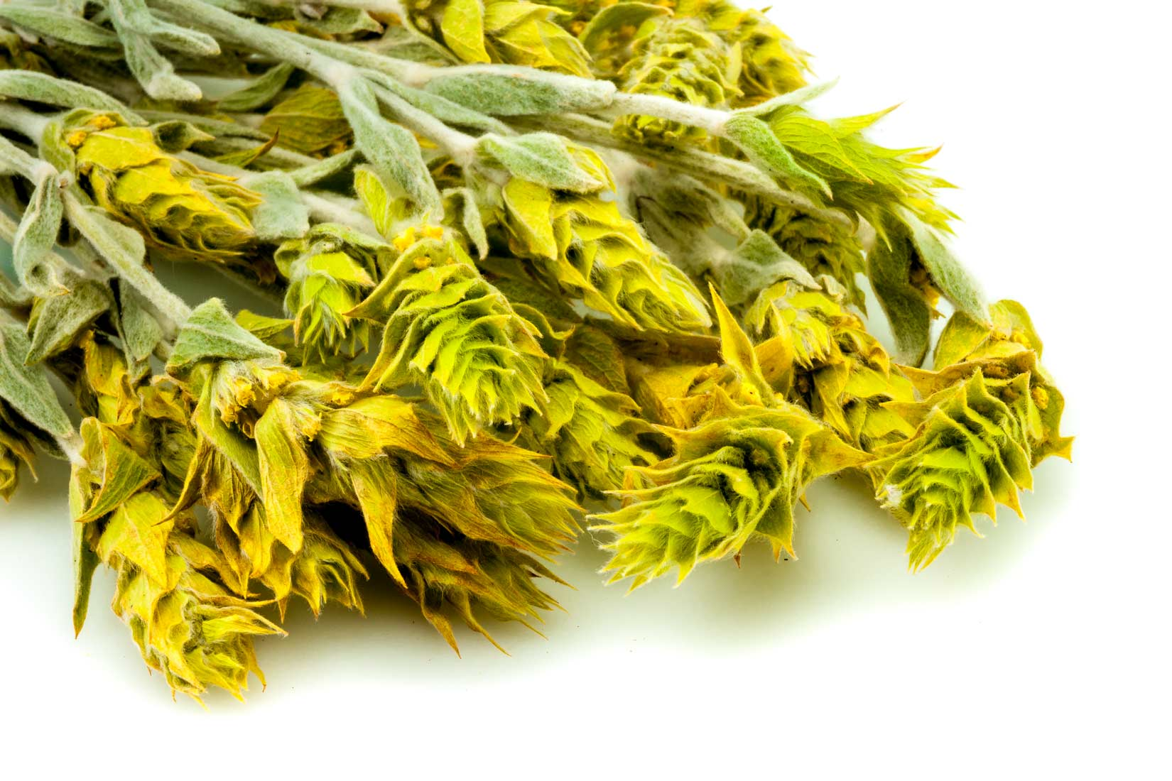 Květenství Sideritisu dodá čaji jemnou vůni, stonky ji podbarví pevným aromatem