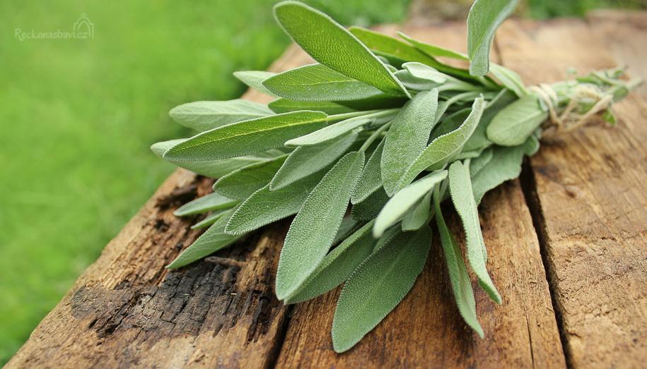 Šalvěj se v Řecku hojně používá v kuchyni i jako léčebný prostředek již více než 2 000 let!