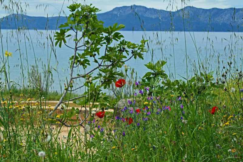 Jaro na ostrově