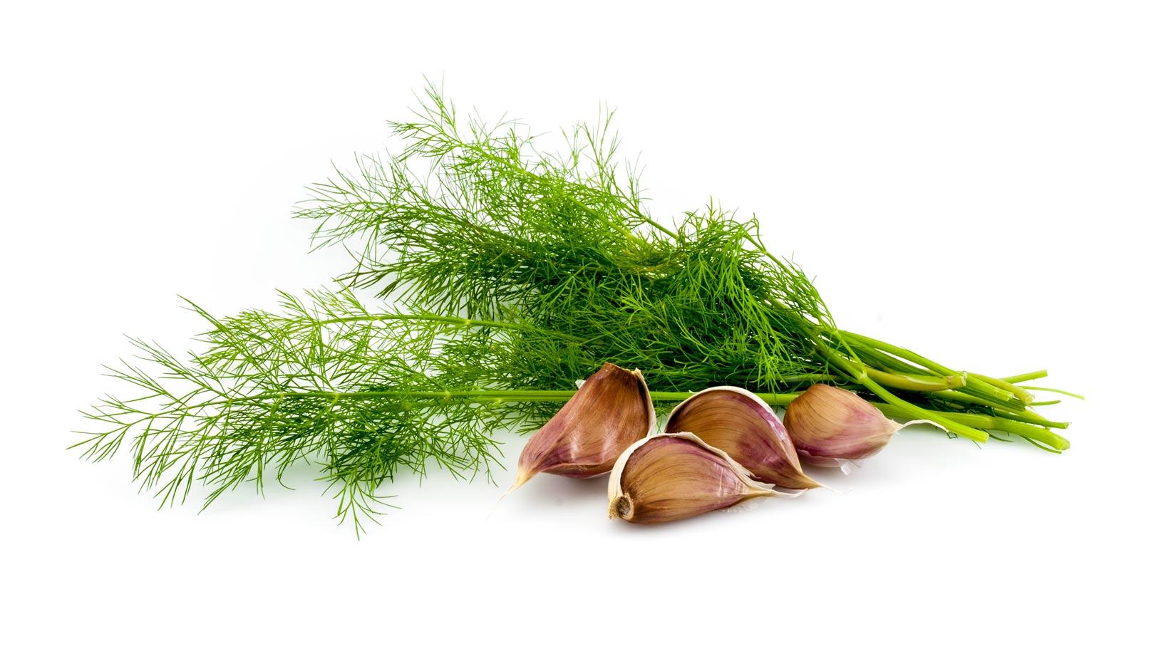 Kopr a česnek. Dvě základní chutě pro tzatziky