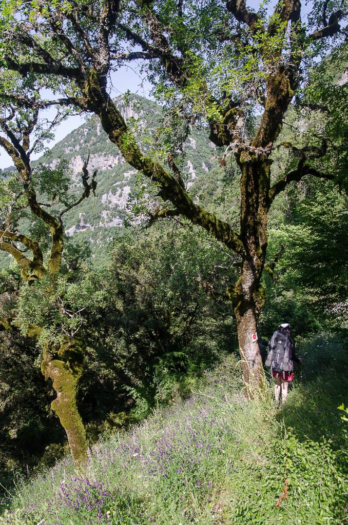 ... v první části treku musíme sejít nějakých 500 výškových metrů dolů do kaňonu Vikos...