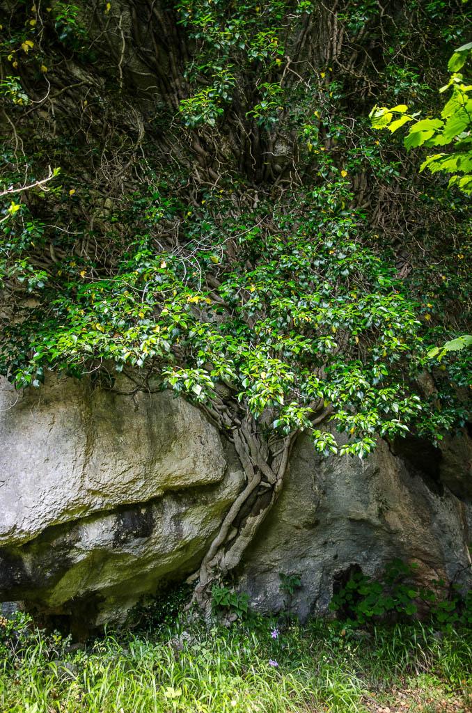 ... cesta roklí po kamenech brzy končí a po levé straně uvidíme vyšlapanou stezku ve stínu stromů...