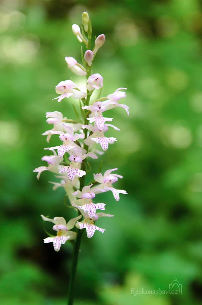 ... a překrásné orchideje ...