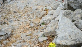 """při velké dávce představivosti tam vidím u cesty """"ananas"""" :D Árón italský!"""