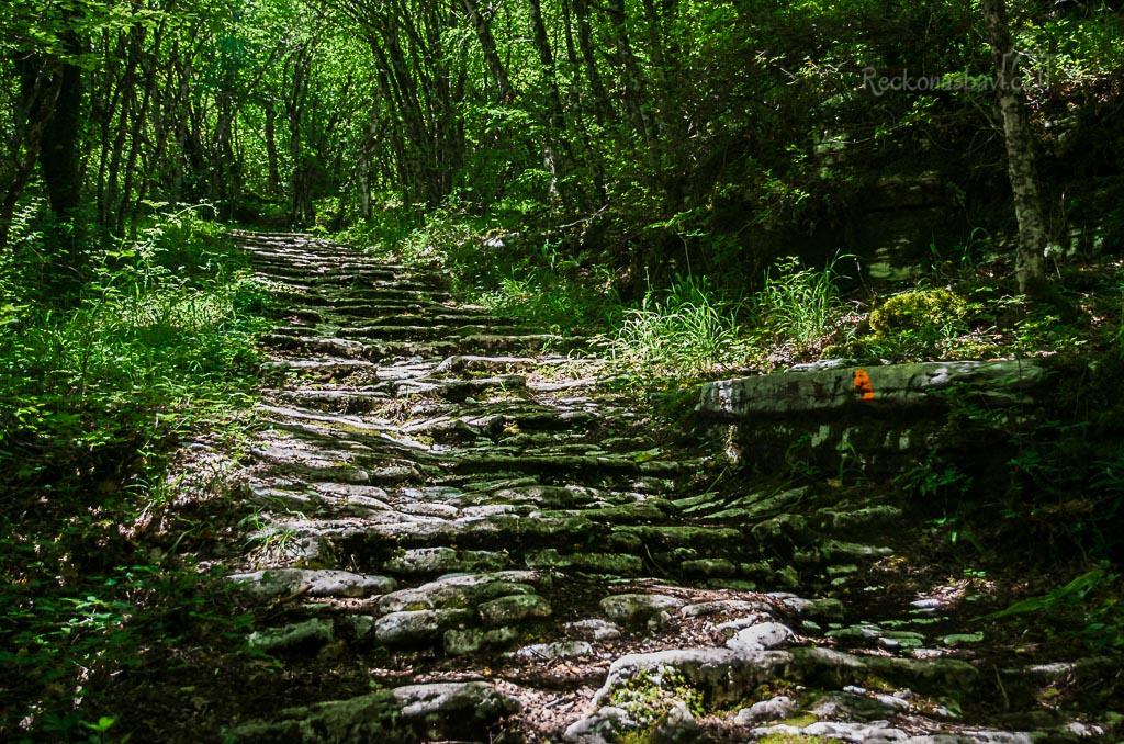 ... V jednom místě procházejí hustým lesem a právě na této stezce můžeme cítit sílu Zagorochorie a nadřazenost matky přírody ...