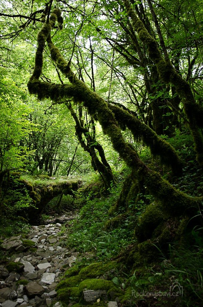 """... v """"elfím lese"""" porůstá kmeny stromů mech ..."""