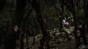 radi forest ikaria