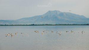 Amvrakikos gulf Preveza Greece